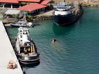 Tahiti-to-NZ